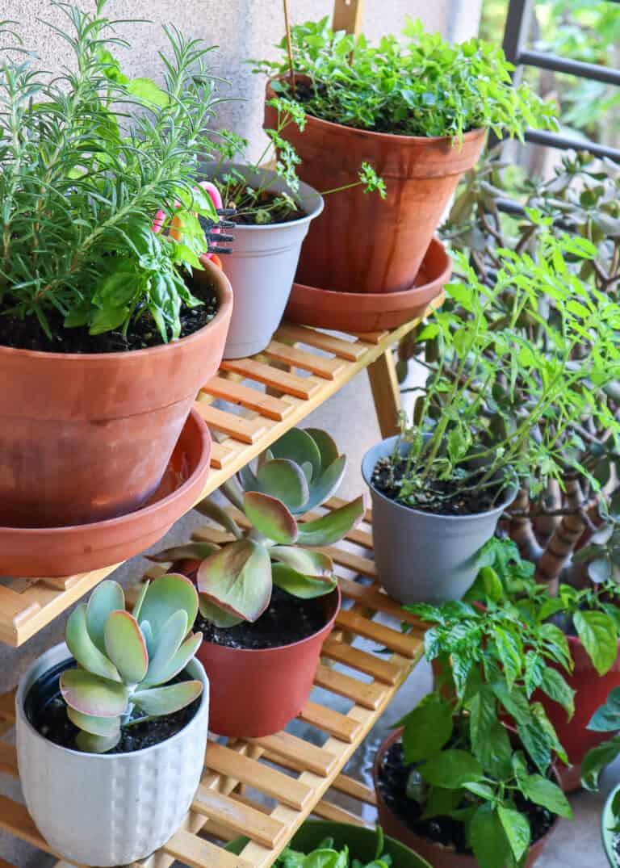 outdoor vegetable garden